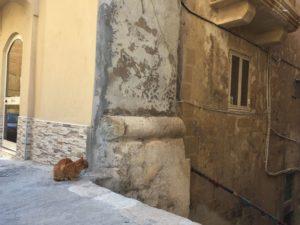 ヴァレッタの猫